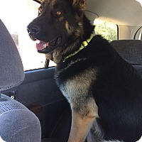 Adopt A Pet :: Marcus - Woodland, CA