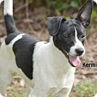 Adopt A Pet :: Kermit ~ meet me! - Glastonbury, CT