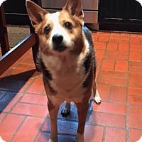 Adopt A Pet :: Buster - Alvarado, TX