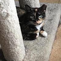 Adopt A Pet :: Joon and Benny - St. Paul, MN