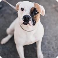 Adopt A Pet :: Lizzy - Fresno CA, CA