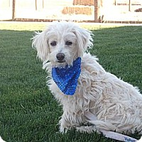 Adopt A Pet :: COLBY - Stockton, CA