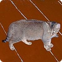 Adopt A Pet :: Sally Mae - Hampton, CT