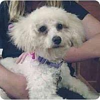 Adopt A Pet :: Kari - La Costa, CA