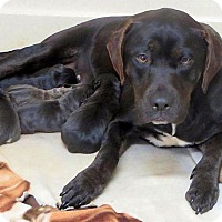 Adopt A Pet :: Marley - Somers, CT