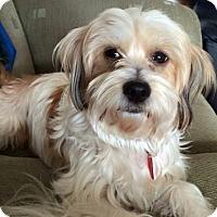 Adopt A Pet :: Traci - Toronto, ON