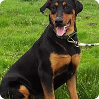 Adopt A Pet :: Elise - Grants Pass, OR