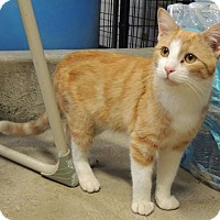 Adopt A Pet :: Mardi - Sullivan, MO