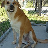 Adopt A Pet :: Percy - Manning, SC