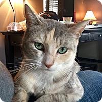 Adopt A Pet :: Sparkles - Chicago, IL