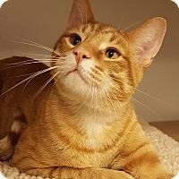 Adopt A Pet :: Houdini - Grayslake, IL
