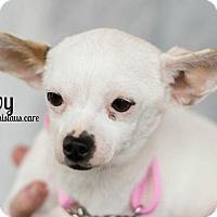 Adopt A Pet :: IVY - Modesto, CA