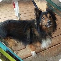 Adopt A Pet :: Tips - Apache Junction, AZ