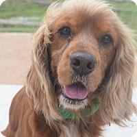 Adopt A Pet :: Ramsey - Houston, TX