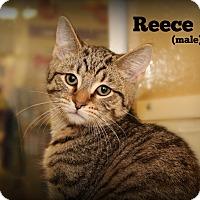 Adopt A Pet :: Reece - Springfield, PA