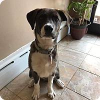 Adopt A Pet :: Stache - Flemington, NJ