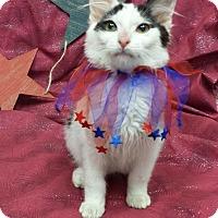 Adopt A Pet :: Bazinga - Addison, IL