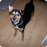 Adopt A Pet :: Lily - Chewelah, WA