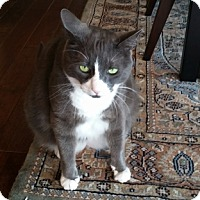 Adopt A Pet :: Chase - Vancouver, BC