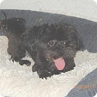 Adopt A Pet :: MONTGOMERY - Mission Viejo, CA