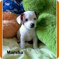 Adopt A Pet :: MARSHA - Higley, AZ