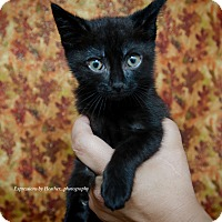 Adopt A Pet :: Morticia - Marlton, NJ