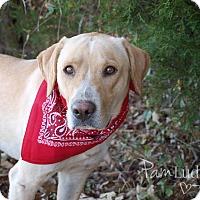 Adopt A Pet :: Jeffrey  adoption pending - Manchester, CT