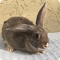 Adopt A Pet :: Baby girl - Bonita, CA