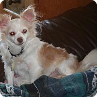 Adopt A Pet :: Toby - Umatilla, FL
