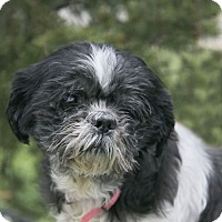 Adopt A Pet :: Jemma A34942190 - Westampton, NJ