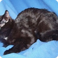 Adopt A Pet :: K-Kimi2-Moakie - Colorado Springs, CO