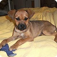 Adopt A Pet :: Pippi - Georgetown, KY