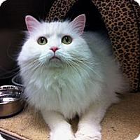 Adopt A Pet :: Luna - Warminster, PA
