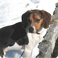 Adopt A Pet :: Grissom - Blairstown, NJ