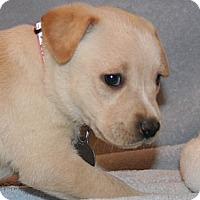 Adopt A Pet :: Arizona - Scottsdale, AZ