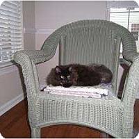 Adopt A Pet :: Bradley - Reston, VA