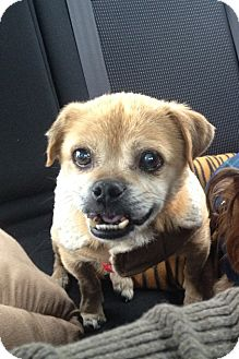 Terrier (Unknown Type, Small)/Pug Mix Dog for adoption in Wilmington, Delaware - Sebastian