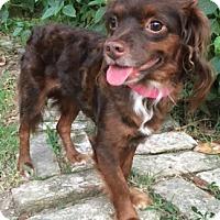 Adopt A Pet :: Jamie Joy - Sugarland, TX