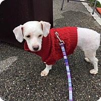 Adopt A Pet :: Bob 2 - Middletown, OH