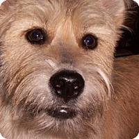 Adopt A Pet :: Lucky - Pierrefonds, QC