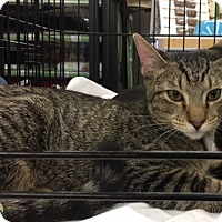 Adopt A Pet :: Aramis - Richmond, VA