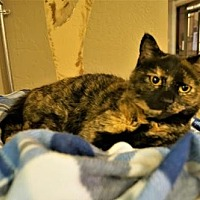 Adopt A Pet :: Patty - Tempe, AZ
