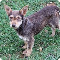 Adopt A Pet :: Liz - Pipe Creed, TX