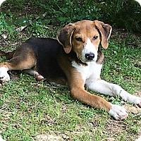 Adopt A Pet :: Shiloh - Stamford, CT