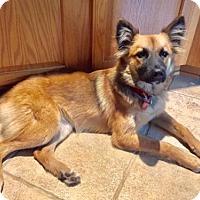 Adopt A Pet :: Foxie - Spring, TX