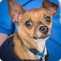Adopt A Pet :: Remington - Loudonville, NY