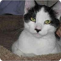 Adopt A Pet :: Gunther - Terre Haute, IN