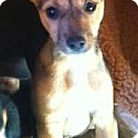 Adopt A Pet :: Taco - pasadena, CA