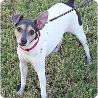 Adopt A Pet :: FERGIE - Phoenix, AZ