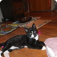 Adopt A Pet :: Henri - Norwich, NY